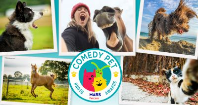 Entries open for Pet Comedy Photo Awards 2020