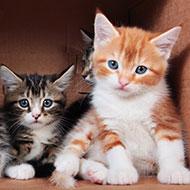 New Dechra webinar series available for vet professionals