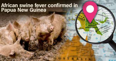 African Swine Fever identified in Papua New Guinea