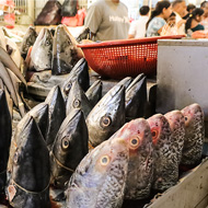 WHO calls for stricter regulations on wet markets