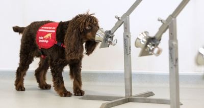 'Covid detection dogs' trial to get underway