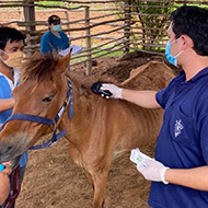Vet issues plea for help with African Horse Sickness