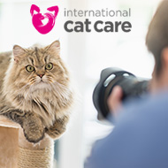 Photography competition launched to document the six life stages of cats