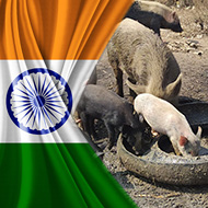 African swine fever confirmed in India