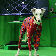Novel motion capture technology could help vets diagnose lameness