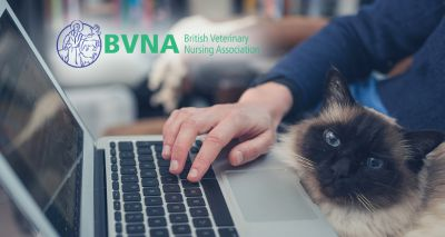 BVNA announces virtual weekend of celebration