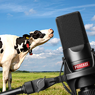 New podcast series for cattle vets
