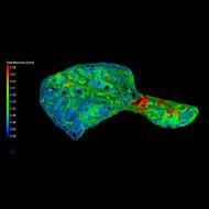 Rare heart bone discovered in chimpanzees