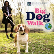 Virtual Big Dog Walk 2020 details announced