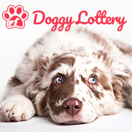 New 'DoggyLottery' to raise funds for rescue centres