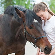 Equine owners reminded to get horses microchipped by October