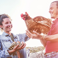 Chicken ownership on the rise, survey reveals