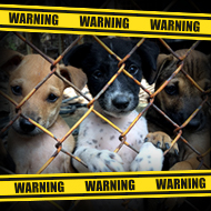 'Don't be Dogfished', pet lovers warned