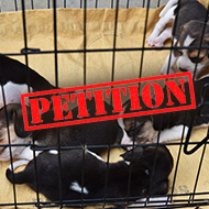 Petition launched to ban import of young puppies