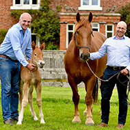 Filly birth offers hope for rare horse breed
