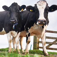 Vets draw on behavioural science to tackle bovine TB
