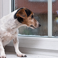 Battersea issues guidance on separation anxiety