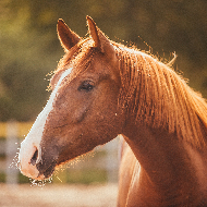 Fellowship to provide new approaches to equine grass sickness
