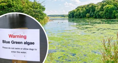 Vets issue warning following spike in blue-green algae reports