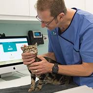 UK's first feline-only eye clinic set to launch in London