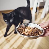 Cats fed once a day are more satisfied, study suggests