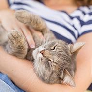 Study identifies five cat owner types