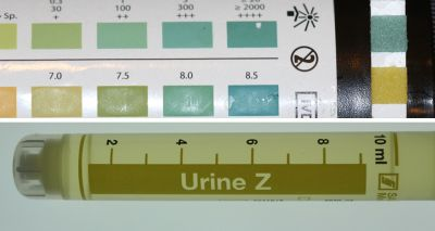 Urine dipstick test for proteinuria in cats innacurate, study suggests
