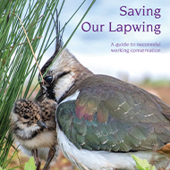 Downward trend of lapwings reversed