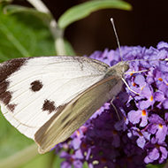British butterfly numbers fall to lowest for 11 years