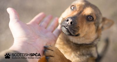 Figures reveal Scotland's hotspots for animals in need