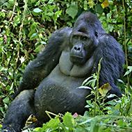 Report reveals 68 per cent decline in wildlife populations