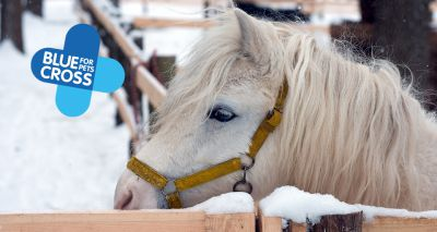 Blue Cross offers help for vulnerable horses during pandemic winter