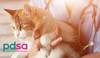 Vet charity warns of 'pet poverty' crisis