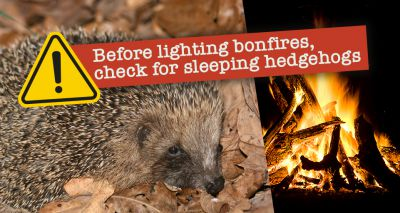 'Lockdown bonfires' spark concern for hedgehogs