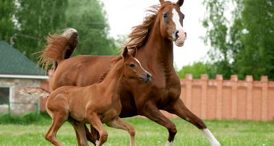 Vets identify genetic cause of fatal condition in Thoroughbreds