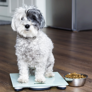 Weight loss in obese dogs improves health markers