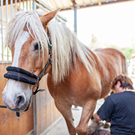 Updated recommendations on equine metabolic syndrome
