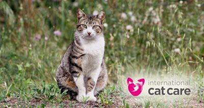 Initiative to tackle growing problem of unowned cats