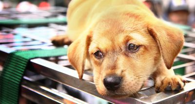 MPs to address concerns over puppy smuggling