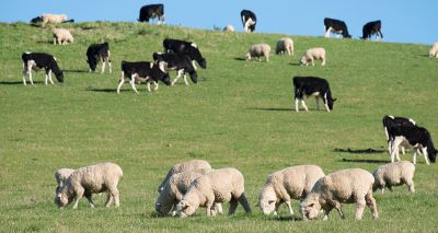 Chief vet welcomes cattle and sheep health and welfare reports