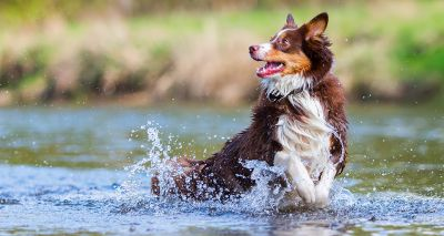 Pesticides found in flea treatments are contaminating English rivers, study finds