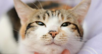 Study finds that slow blinking can help owners bond with their cats