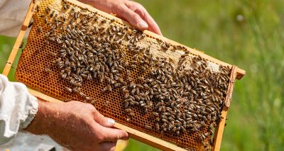 New 10 year plan launched to help protect honey bees