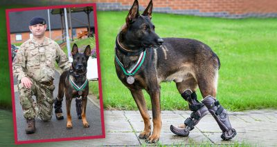 Military dog Kuno awarded for bravery