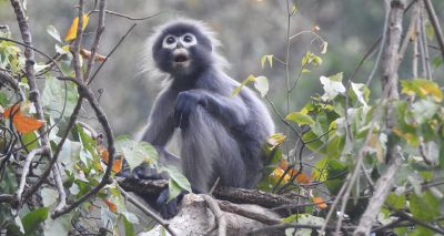 Researchers discover new primate species in Myanmar
