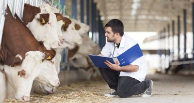 Two new RCVS Working Parties to assess vet tech role and sustainability
