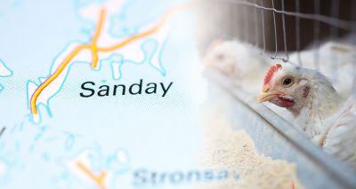 Avian influenza confirmed in Scotland
