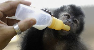 Vets welcome proposed ban on primates as pets