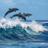 Fatal skin disease in dolphins linked to climate change