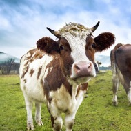 BVA welcomes Government's new agricultural transition plan